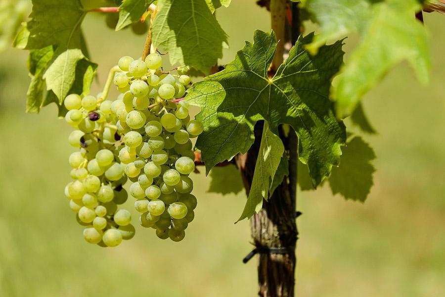 vignes tourisme loir et cher